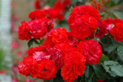 これくらいの花束をプレゼントしたら、貰った人は喜ぶかな?