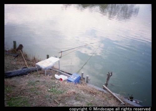 孤独な釣り竿