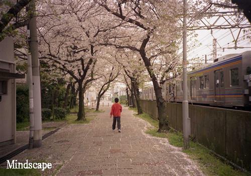桜をゆく2
