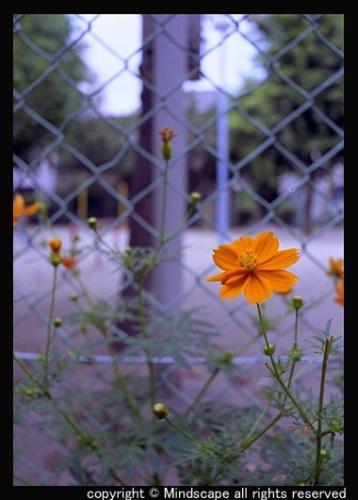 中崎町で見た花