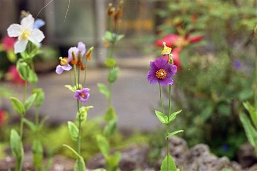 ULTRAで撮った花1