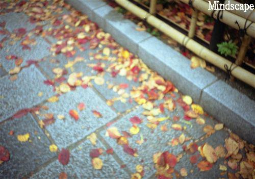 石畳の小径