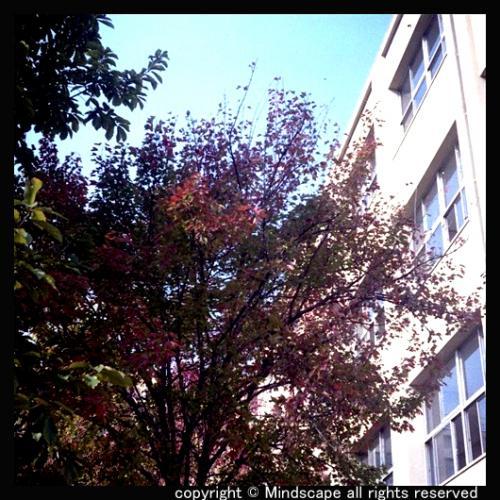 校庭の秋2
