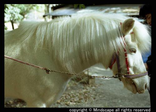 whitehorse1