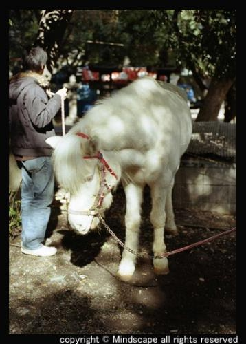 whitehorse2