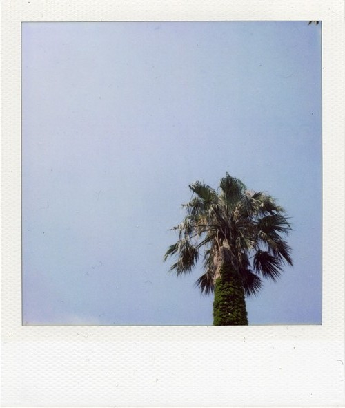 たぶん椰子の木(オキナ椰子モドキだと思う)Type600