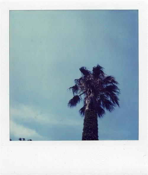 たぶん椰子の木(オキナ椰子モドキだと思う)TimeZero
