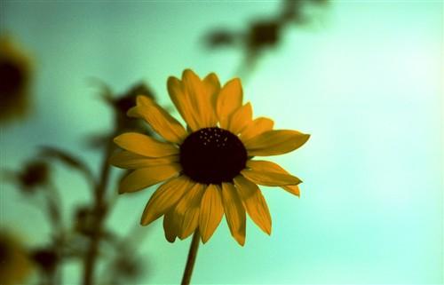 季節はずれの花1