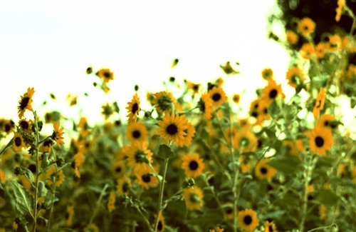季節はずれの花2