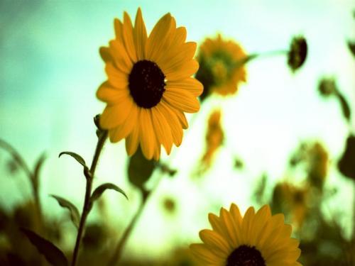 季節はずれの花3