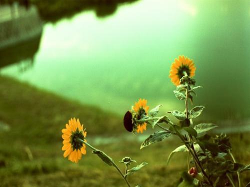 季節はずれの花4