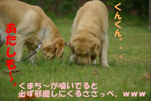 02お散歩2.jpg