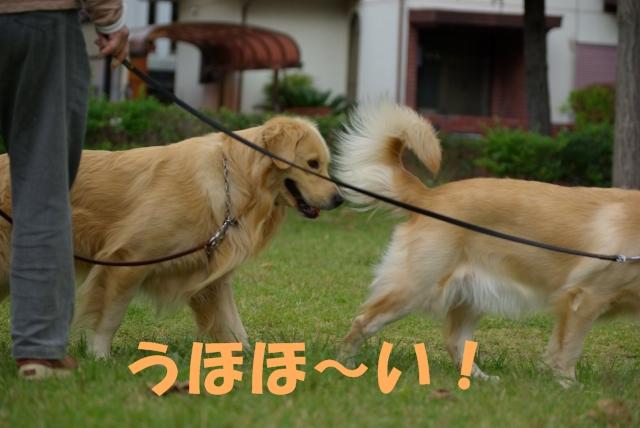 03お散歩3.jpg