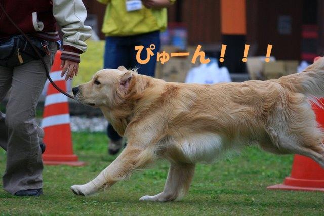 09運動会4.JPG