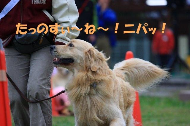 11運動会6.JPG