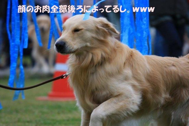 13運動会8.JPG