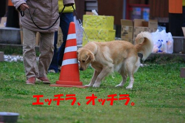 14運動会9.JPG