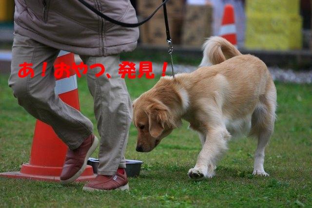 16運動会11.JPG