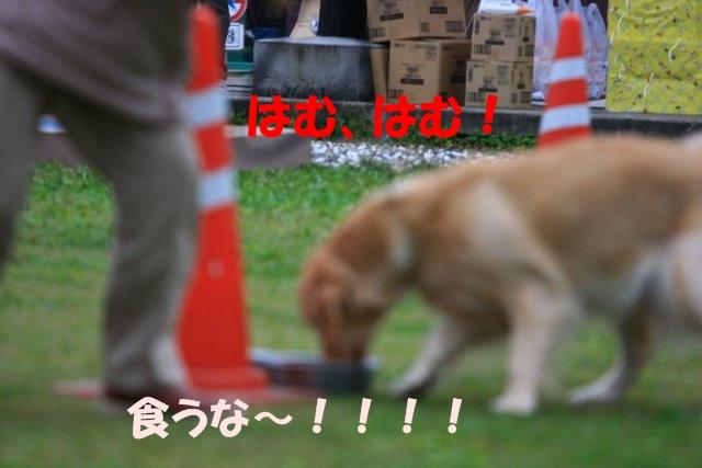 17運動会12.JPG