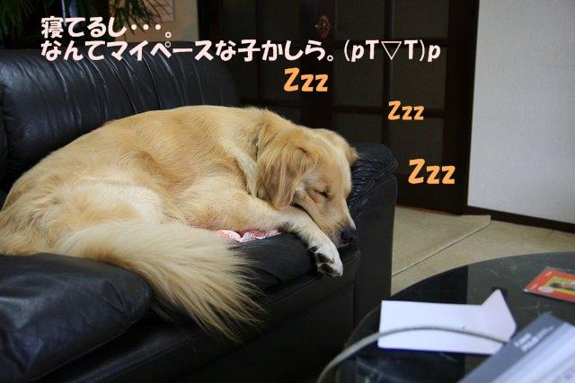 12愛ちゃんち
