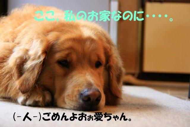 13愛ちゃんち