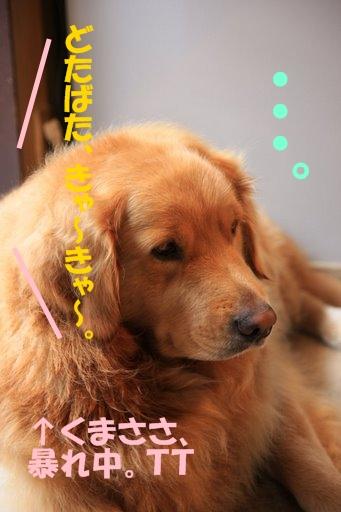 15愛ちゃんち