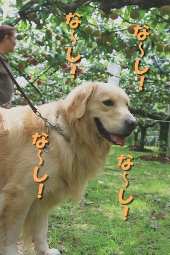 梨狩り_02