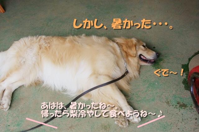 梨狩り_08