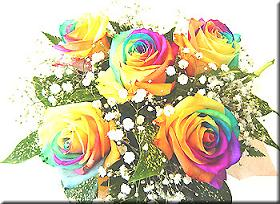 虹色のバラ