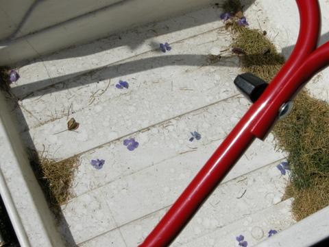 芝刈り機に落ちたベロニカの花びら