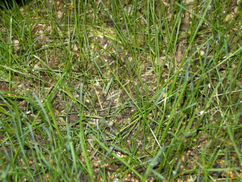 芝に異変1