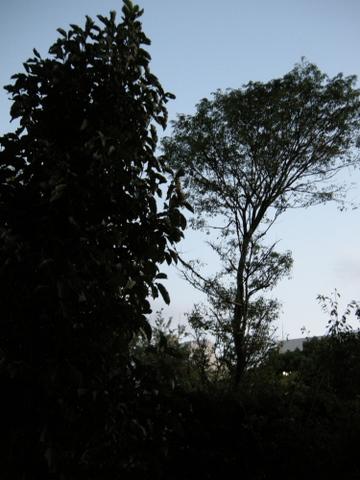 南側の樹木