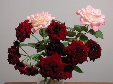 剪定したバラ