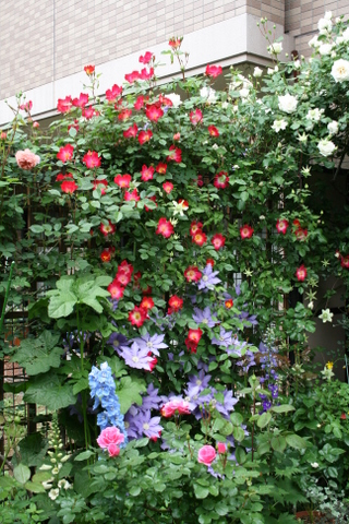 バラ花壇全景