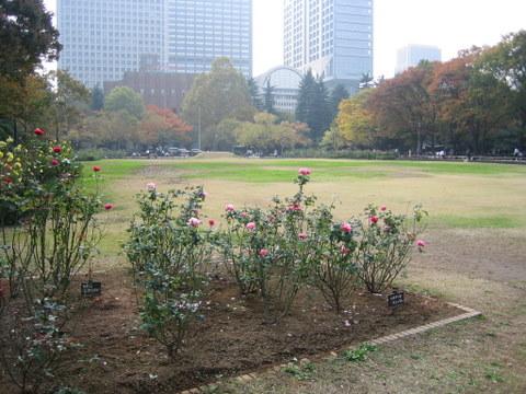 日比谷公園2009/11/10 1