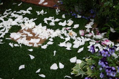 散り落ちた新雪の花びら
