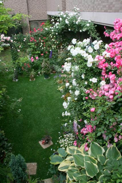 バラ満開の庭3
