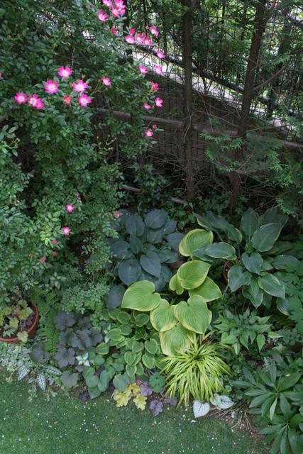 バラ満開の庭5
