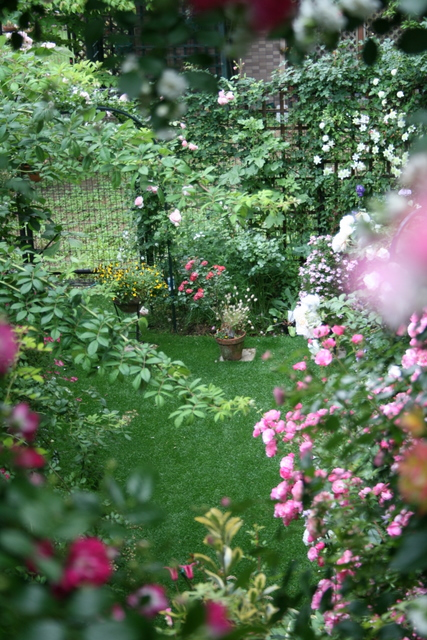 今日の庭 2009/5/23