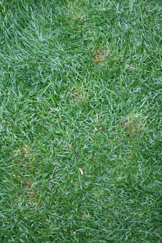芝の病気1