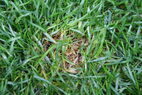 芝の病気2