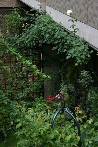 庭の様子 2009/7/4