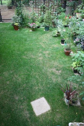 芝庭の様子 2009/7/18