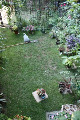 今日の芝庭1 2009/8/16
