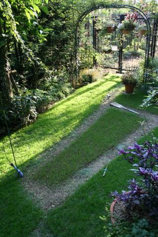 庭の西洋芝