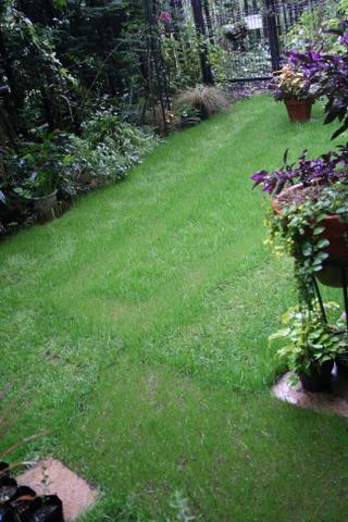 今日の芝庭1 2009/10/2