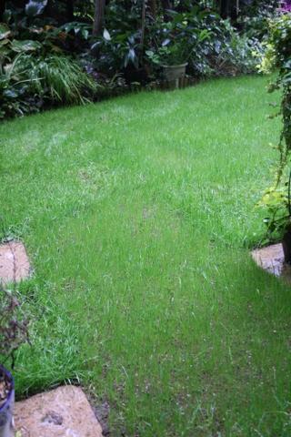 今日の芝庭2 2009/10/2