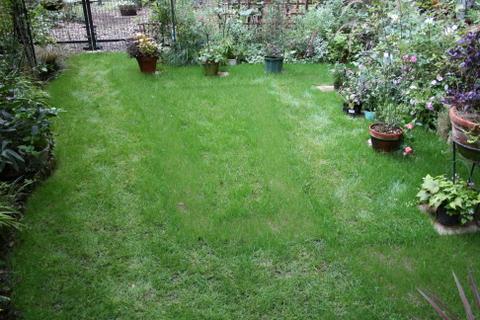 今日の芝庭1
