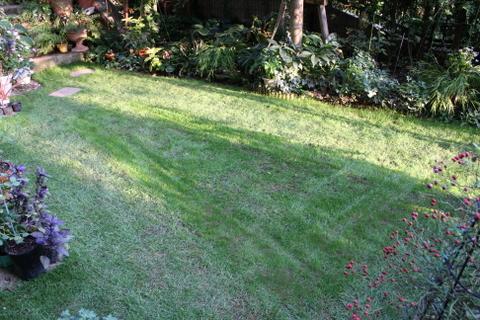 芝庭の様子2 2009/10/4