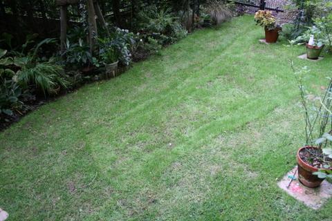 台風通過明けの芝庭